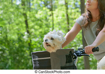 woman riding a bike with her dog