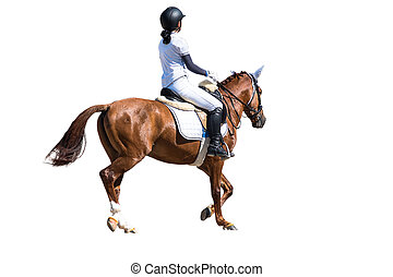 Woman Riding a Horse. Isolated. Equestrian Sport.