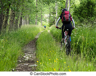 Woman riding mountain bike in the forest.