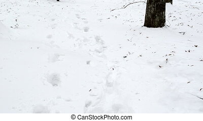 closeup of woman dress in coat and gloves run through winter snow. foot marks prints left in park snow.