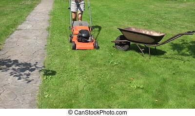 woman shake grass from mower collector in wheelbarrow at yard. 4K