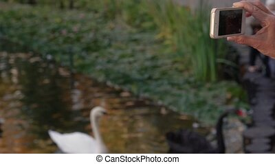 Woman shoots swans on the phone.