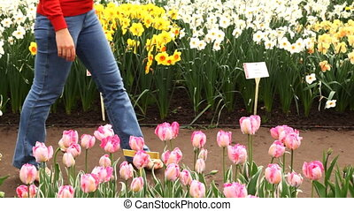 Woman sits down and sniffs beautiful pink tulips - young...
