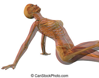 woman sitting with skeleton and muscles showing isolated on white background