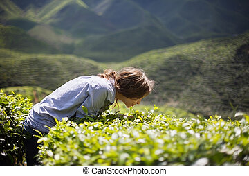Woman Smelling Tea Leaves - Young Woman on Tea Plantation...