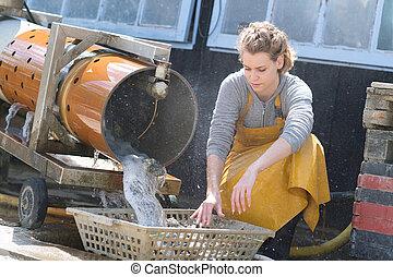 woman sorting oyster farm