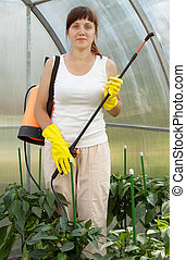 Woman spraying pepper  plant