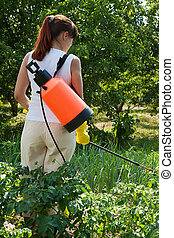 Woman spraying potato plant