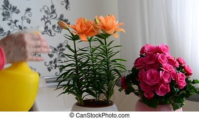 Woman sprays different potted plants - Woman sprays a...