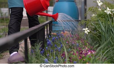 woman sprays flowers on flowerbed in country house yard -...