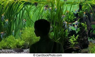Woman stay near big aquarium tank, watching the fish.