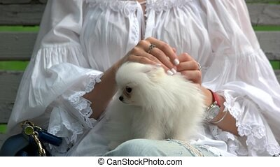 Woman stretching her white hairy dog.