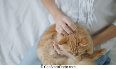 Woman strokes cute ginger cat. Fluffy pet lying on her...