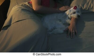 Woman Stroking Dog In Bed Sleeping At Night