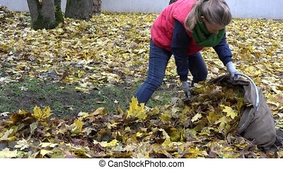 woman stuff dry leaves into material sack in house backyard....