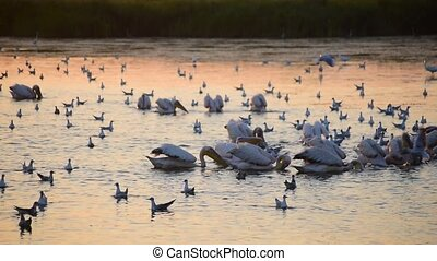 Woman takes photo of pelicans and seagulls - Silhouette of...