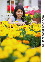 Woman taking a yellow plant