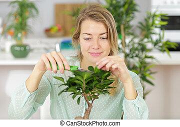 woman taking care of a bonsai