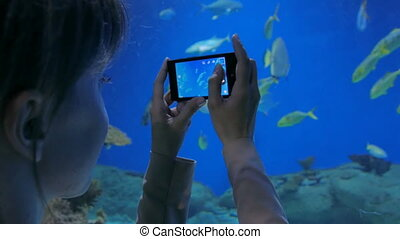 Woman taking pictures of fishes with smartphone. Technology...