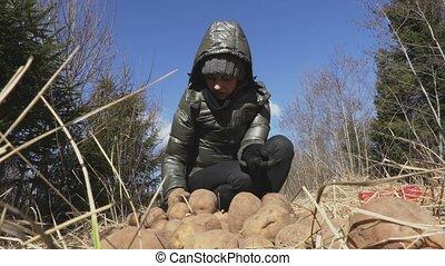 Woman throws potatoes around on grass.Wildlife animals...
