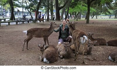 Woman touches Nara deer - Smiling tourist woman touches one...