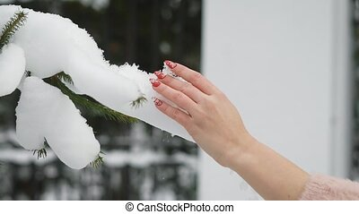 Woman touches tree branch with a snow on it. - Close up shot...
