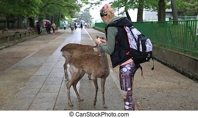 Woman touches wild deer - Tourist woman touches one of...