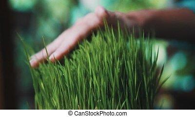 Woman touching green grass with rain drops