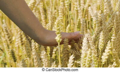 Woman touching ripe wheat