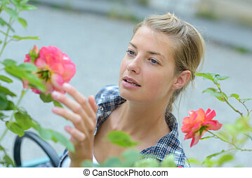 woman touching the red roses