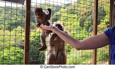 Woman tourist monkey