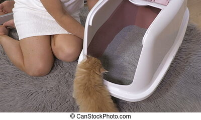 Woman training kitten to go in the cat litter box