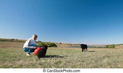 Woman Training Newfoundland Dog - Young woman training the...