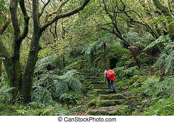 Woman trekking in green suntropical forest