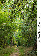 Woman trekking in lush forest
