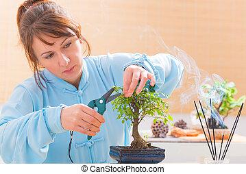 Woman trimming bonsai tree - Beautiful woman wearing...