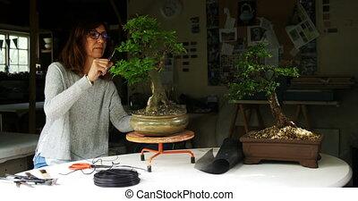Woman trimming leaf of bonzai plant 4k - Mature woman...