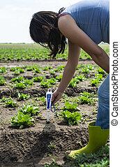 Woman use digital soil meter in the soil. Lettuce plants. Sunny day.