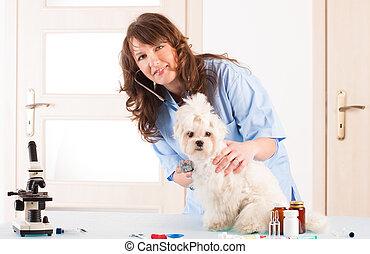 Woman vet holding a dog