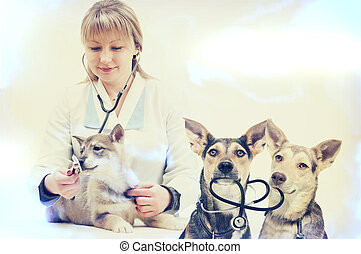 woman veterinarian and puppy
