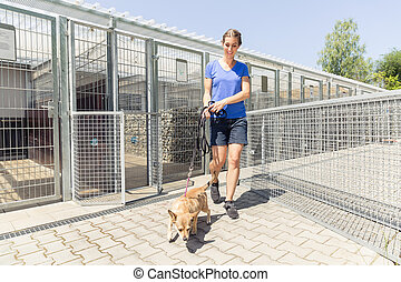 Woman walking a dog in animal shelter wanting to adopt the...
