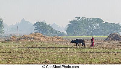 Woman Walking a Water Buffalo