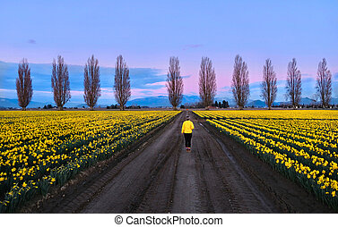 Woman walking in spring fields and alley at sunset