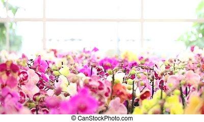 woman walking in the garden flowers