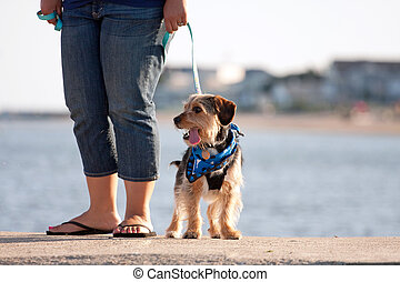 Woman Walking The Puppy