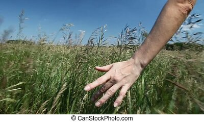 Woman walks across the field - Close up of woman's hand...