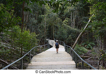 Woman walks on a path in the rainforest of Jamison Valley Blue Mountains New South Wales Australia
