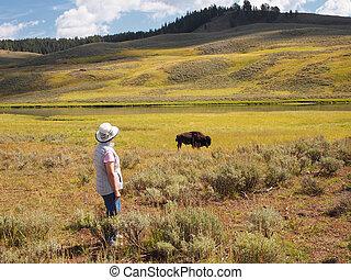 Woman watching a North American Buffalo Grazing in Field with ri