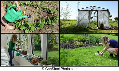 Woman water cactus flower beans and tomato plant. Video...