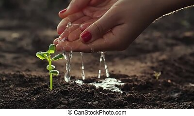 Woman watering a young plant from palms